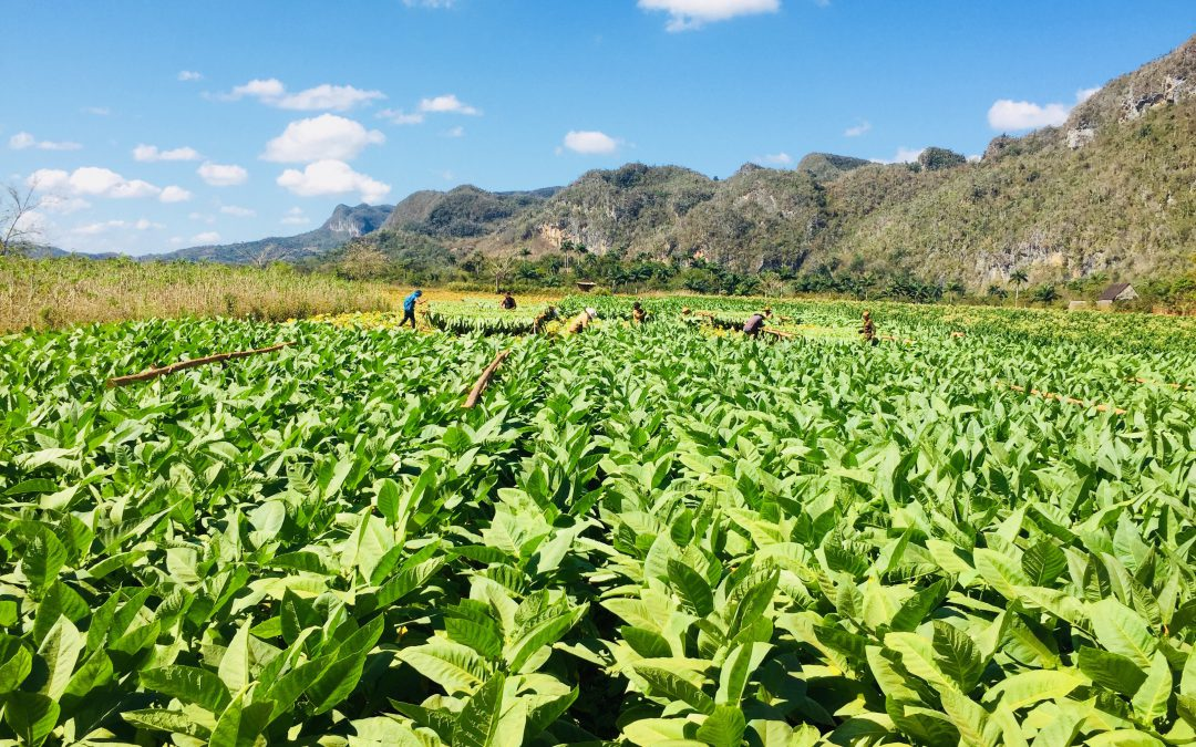 ferntourisitk unterwegs nach Kuba – Nationalparks im Westen Vinales und Las Terrazas