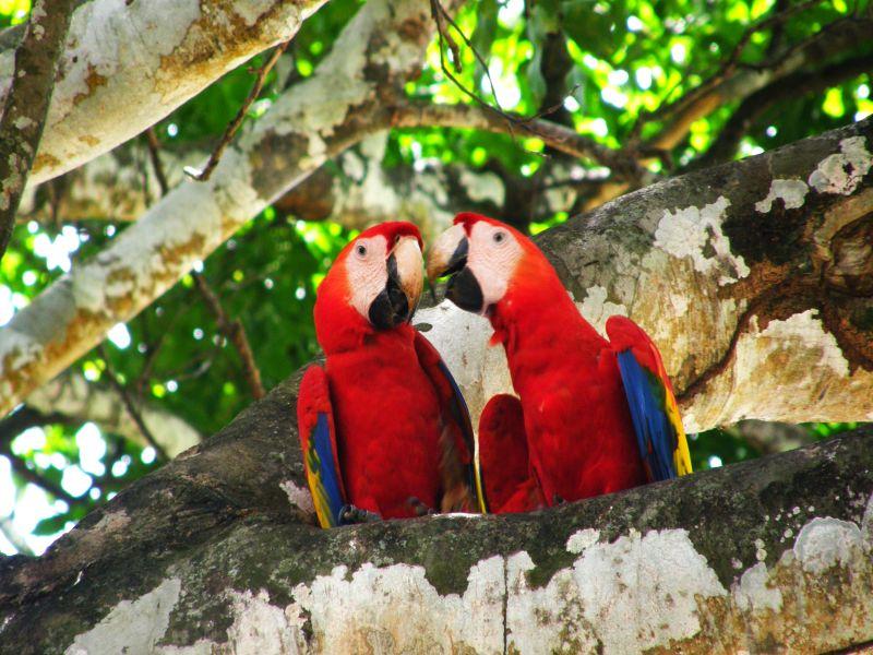 ferntouristik unterwegs nach Costa Rica – Naturwunder und Traumstrände im Paradies