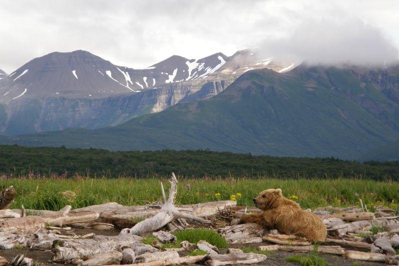 ferntouristik unterwegs nach Alaska – Natur pur!